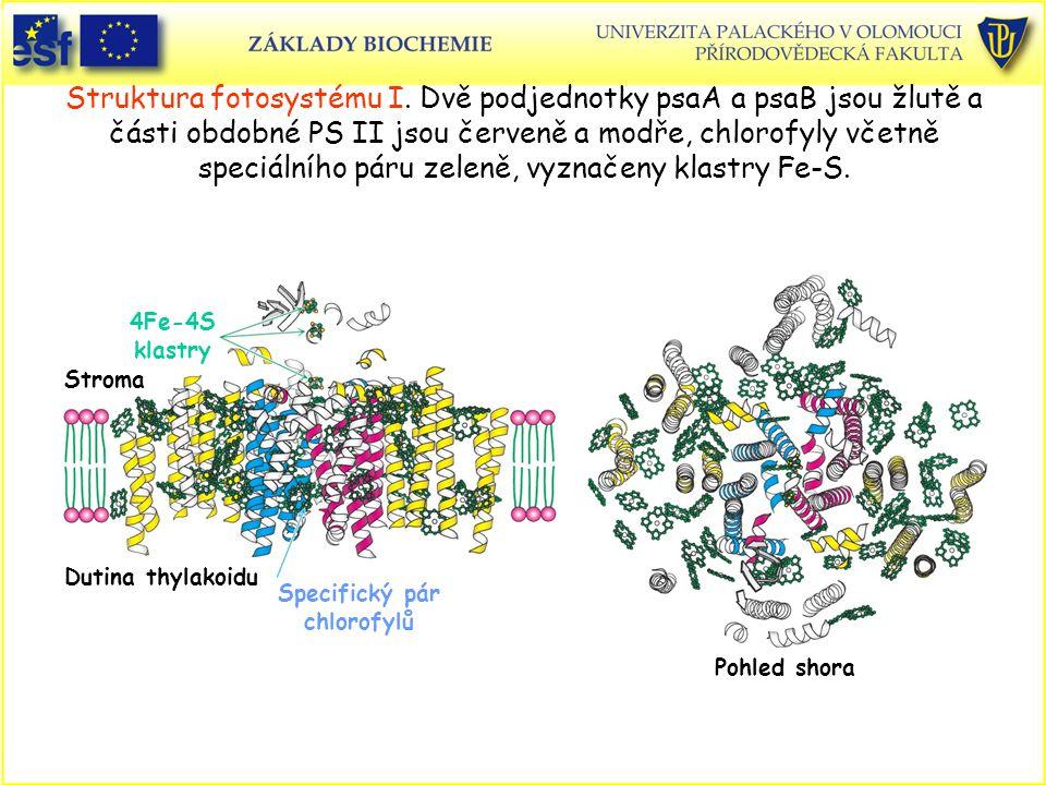 Struktura fotosystému I. Dvě podjednotky psaA a psaB jsou žlutě a části obdobné PS II jsou červeně a modře, chlorofyly včetně speciálního páru zeleně,