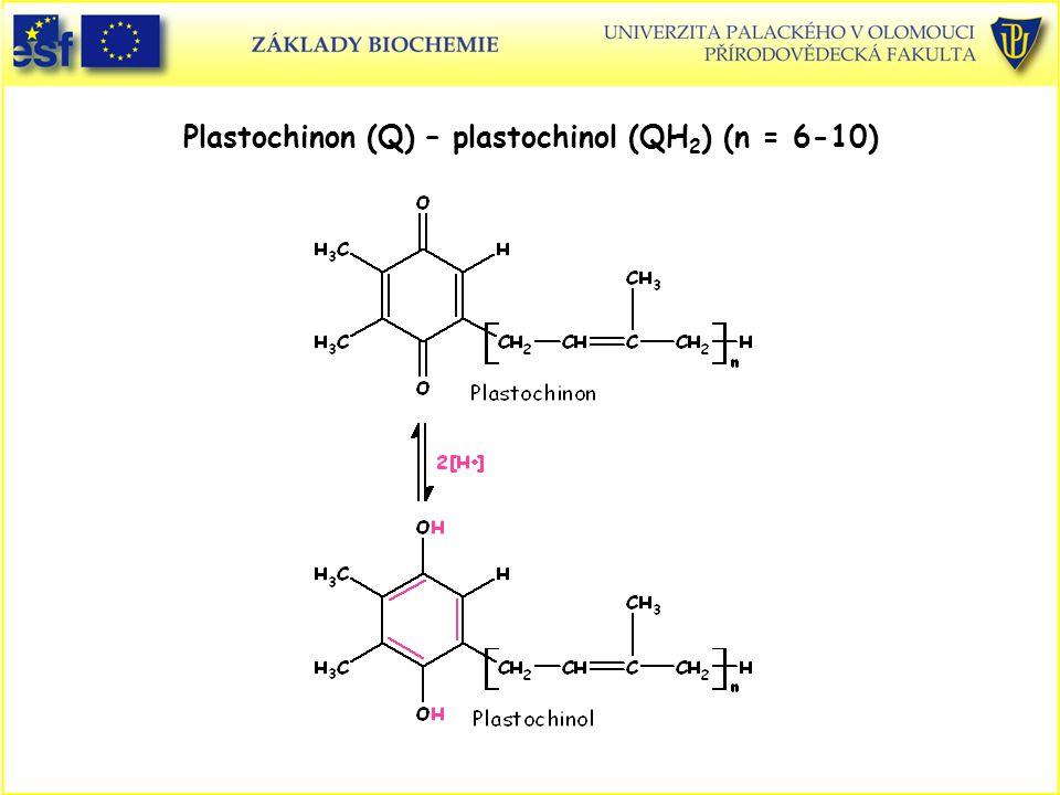 Plastochinon (Q) – plastochinol (QH 2 ) (n = 6-10)