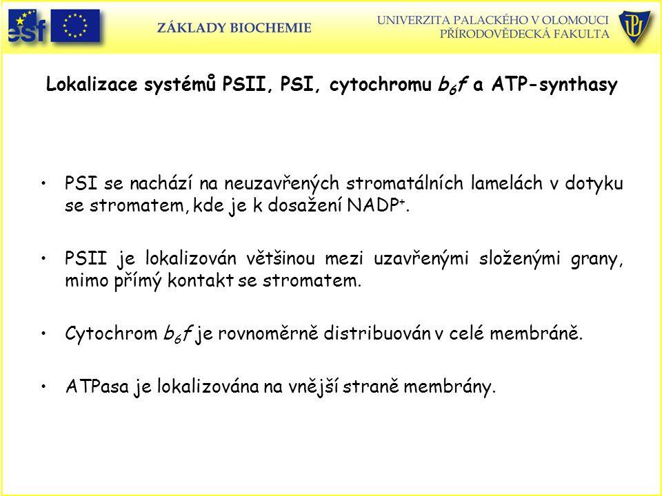 Lokalizace systémů PSII, PSI, cytochromu b 6 f a ATP-synthasy PSI se nachází na neuzavřených stromatálních lamelách v dotyku se stromatem, kde je k do