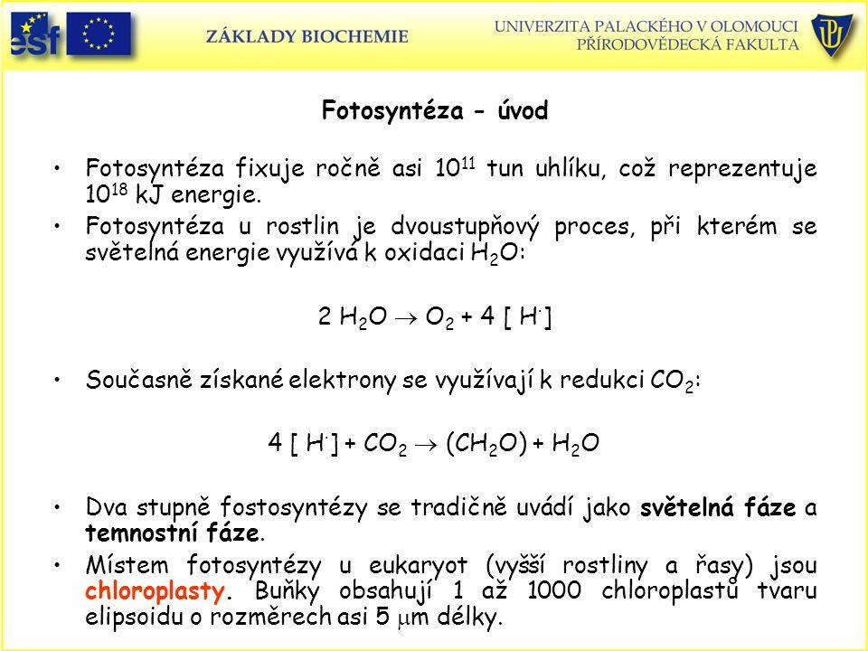 Fotosyntéza - úvod Fotosyntéza fixuje ročně asi 10 11 tun uhlíku, což reprezentuje 10 18 kJ energie. Fotosyntéza u rostlin je dvoustupňový proces, při