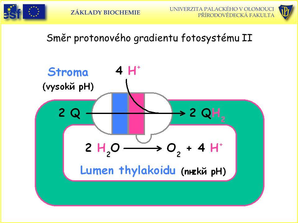 Směr protonového gradientu fotosystému II
