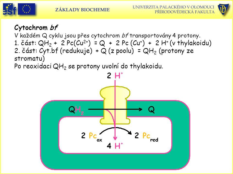 Cytochrom bf V každém Q cyklu jsou přes cytochrom bf transportovány 4 protony. 1. část: QH 2 + 2 Pc(Cu 2+ ) = Q + 2 Pc (Cu + ) + 2 H + (v thylakoidu)