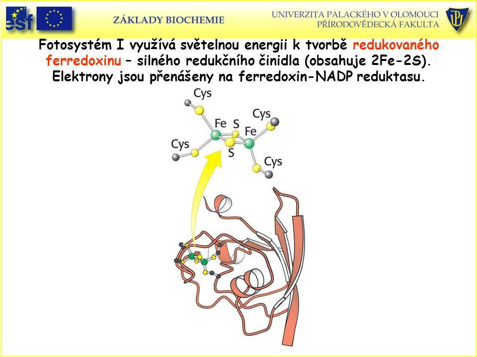 Fotosystém I využívá světelnou energii k tvorbě redukovaného ferredoxinu – silného redukčního činidla (obsahuje 2Fe-2S). Elektrony jsou přenášeny na f