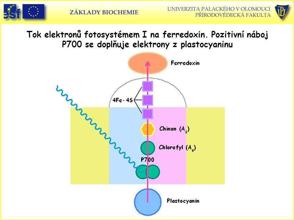 Tok elektronů fotosystémem I na ferredoxin. Pozitivní náboj P700 se doplňuje elektrony z plastocyaninu