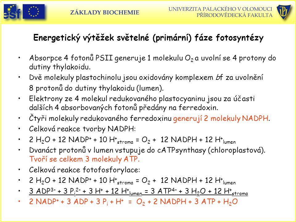 Energetický výtěžek světelné (primární) fáze fotosyntézy Absorpce 4 fotonů PSII generuje 1 molekulu O 2 a uvolní se 4 protony do dutiny thylakoidu. Dv