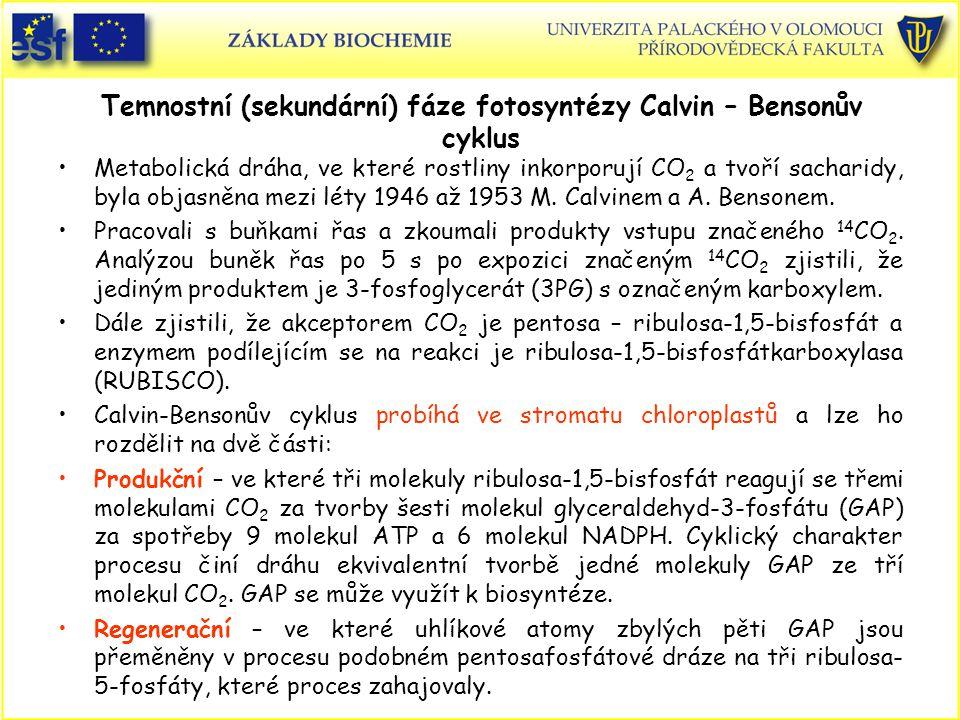 Temnostní (sekundární) fáze fotosyntézy Calvin – Bensonův cyklus Metabolická dráha, ve které rostliny inkorporují CO 2 a tvoří sacharidy, byla objasně
