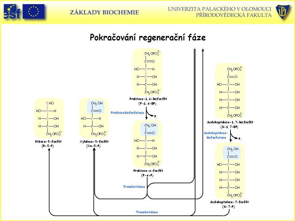 Pokračování regenerační fáze