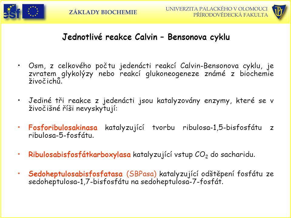 Jednotlivé reakce Calvin – Bensonova cyklu Osm, z celkového počtu jedenácti reakcí Calvin-Bensonova cyklu, je zvratem glykolýzy nebo reakcí glukoneoge