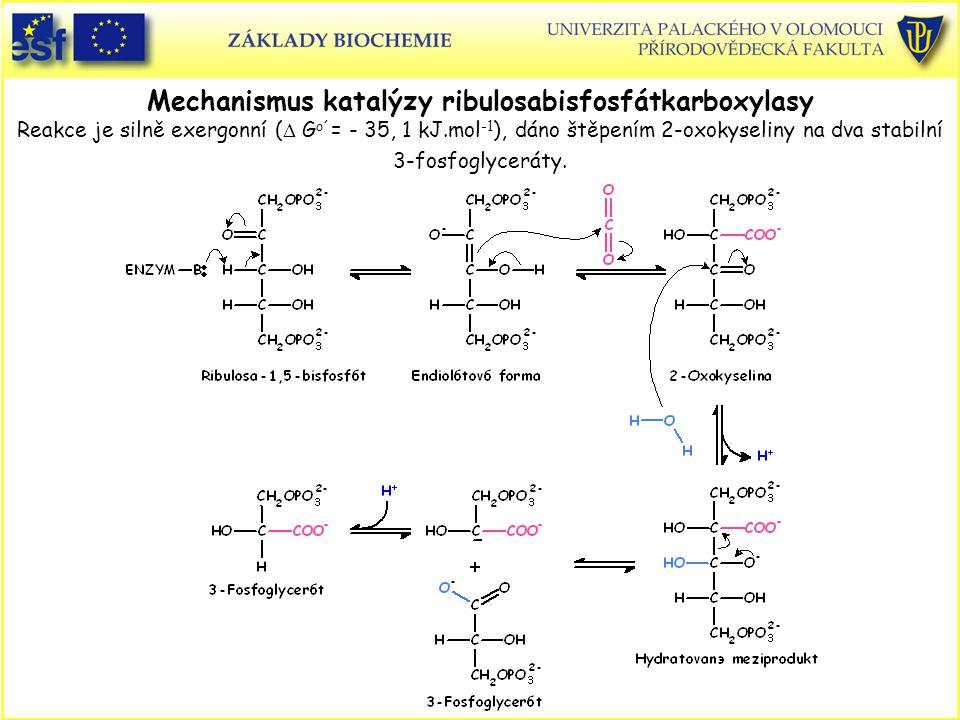 Mechanismus katalýzy ribulosabisfosfátkarboxylasy Reakce je silně exergonní (  G o´ = - 35, 1 kJ.mol -1 ), dáno štěpením 2-oxokyseliny na dva stabiln