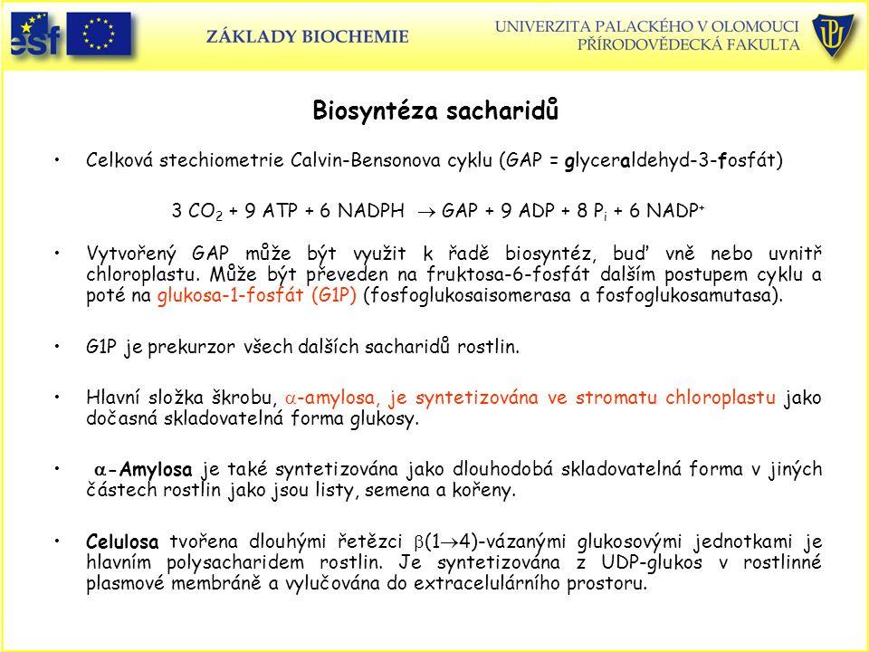 Biosyntéza sacharidů Celková stechiometrie Calvin-Bensonova cyklu (GAP = glyceraldehyd-3-fosfát) 3 CO 2 + 9 ATP + 6 NADPH  GAP + 9 ADP + 8 P i + 6 NA