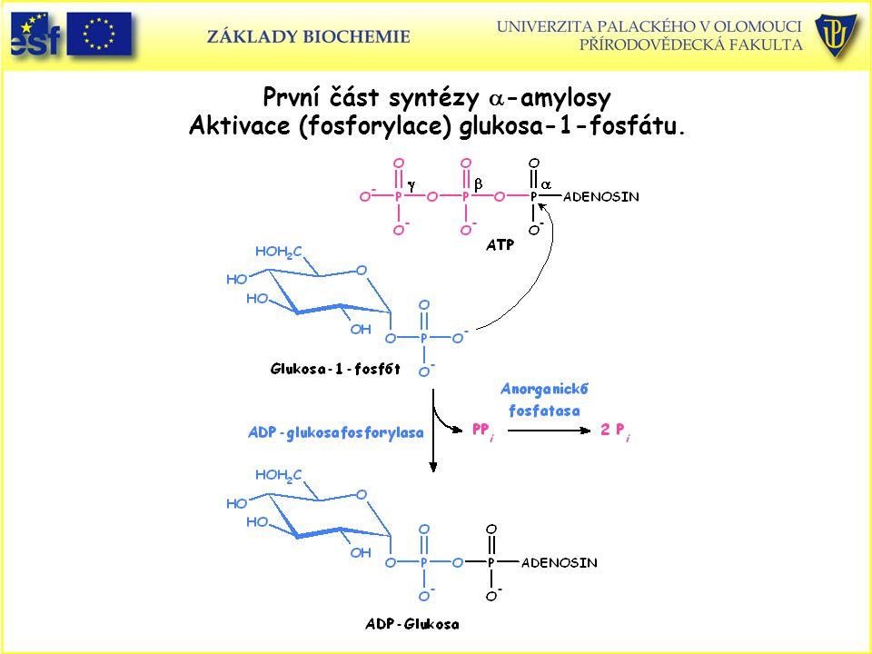 První část syntézy  -amylosy Aktivace (fosforylace) glukosa-1-fosfátu.