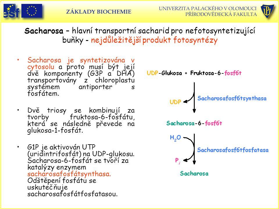 Sacharosa – hlavní transportní sacharid pro nefotosyntetizující buňky - nejdůležitější produkt fotosyntézy Sacharosa je syntetizována v cytosolu a pro