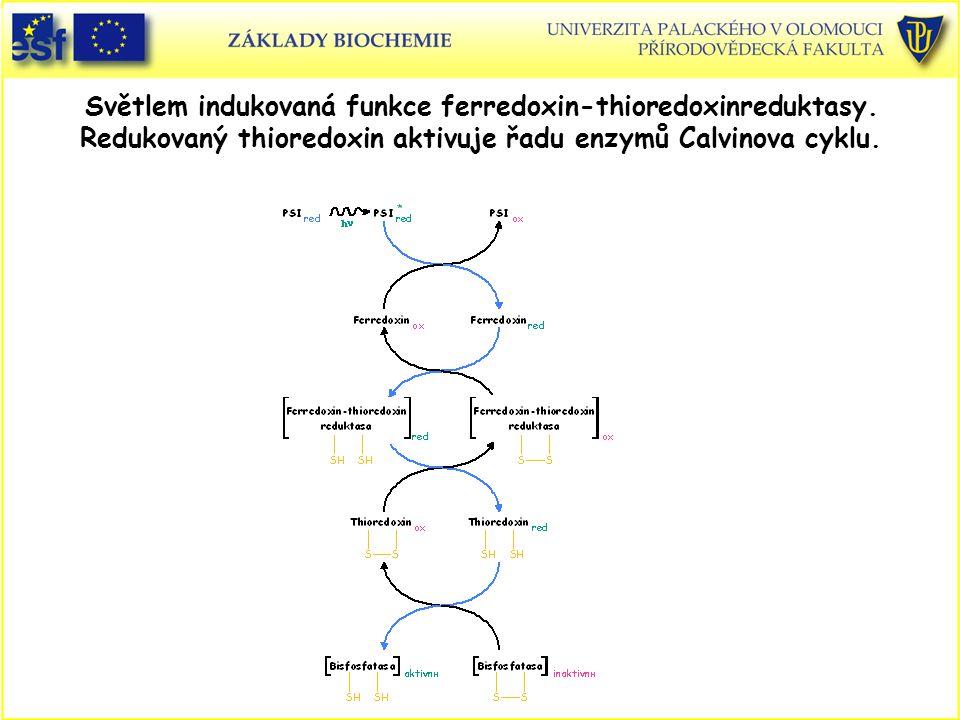 Světlem indukovaná funkce ferredoxin-thioredoxinreduktasy. Redukovaný thioredoxin aktivuje řadu enzymů Calvinova cyklu.