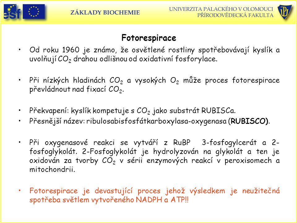 Fotorespirace Od roku 1960 je známo, že osvětlené rostliny spotřebovávají kyslík a uvolňují CO 2 drahou odlišnou od oxidativní fosforylace. Při nízkýc