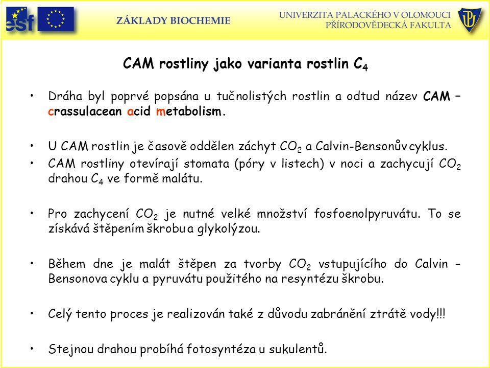 CAM rostliny jako varianta rostlin C 4 Dráha byl poprvé popsána u tučnolistých rostlin a odtud název CAM – crassulacean acid metabolism. U CAM rostlin