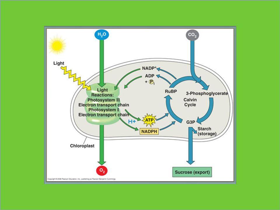 Absorpce slunečního záření