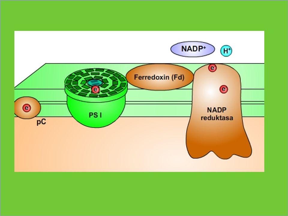 ATP-synthasa ATP synthasa