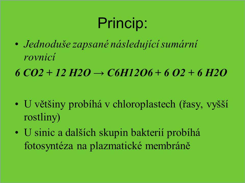 Faktory ovlivňující fotosyntézu SvětloSvětlo: jeho intenzita zvyšuje rychlost, ale jen do určité míry (světelná saturace) světlomilné r....