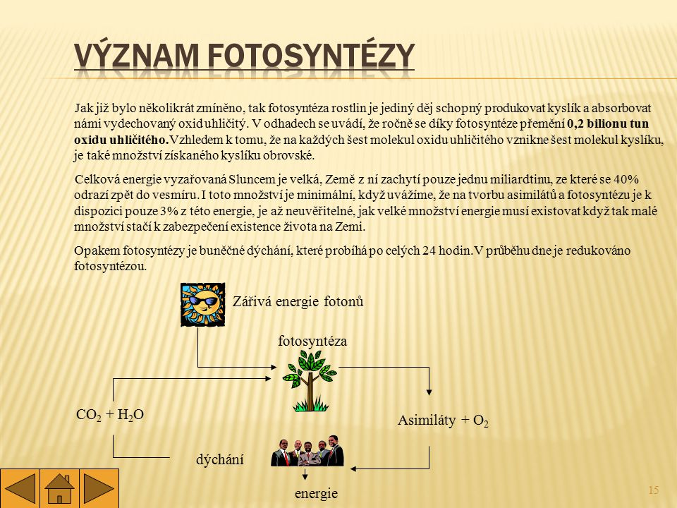 15 Jak již bylo několikrát zmíněno, tak fotosyntéza rostlin je jediný děj schopný produkovat kyslík a absorbovat námi vydechovaný oxid uhličitý. V odh