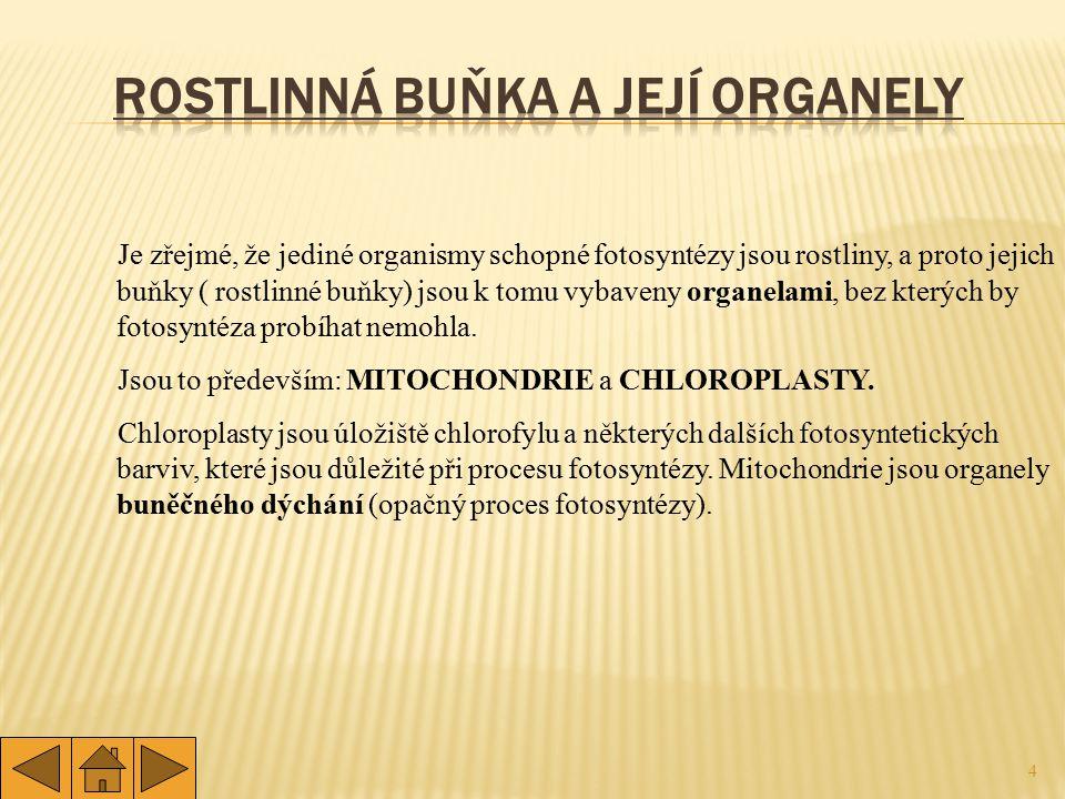 4 Je zřejmé, že jediné organismy schopné fotosyntézy jsou rostliny, a proto jejich buňky ( rostlinné buňky) jsou k tomu vybaveny organelami, bez který