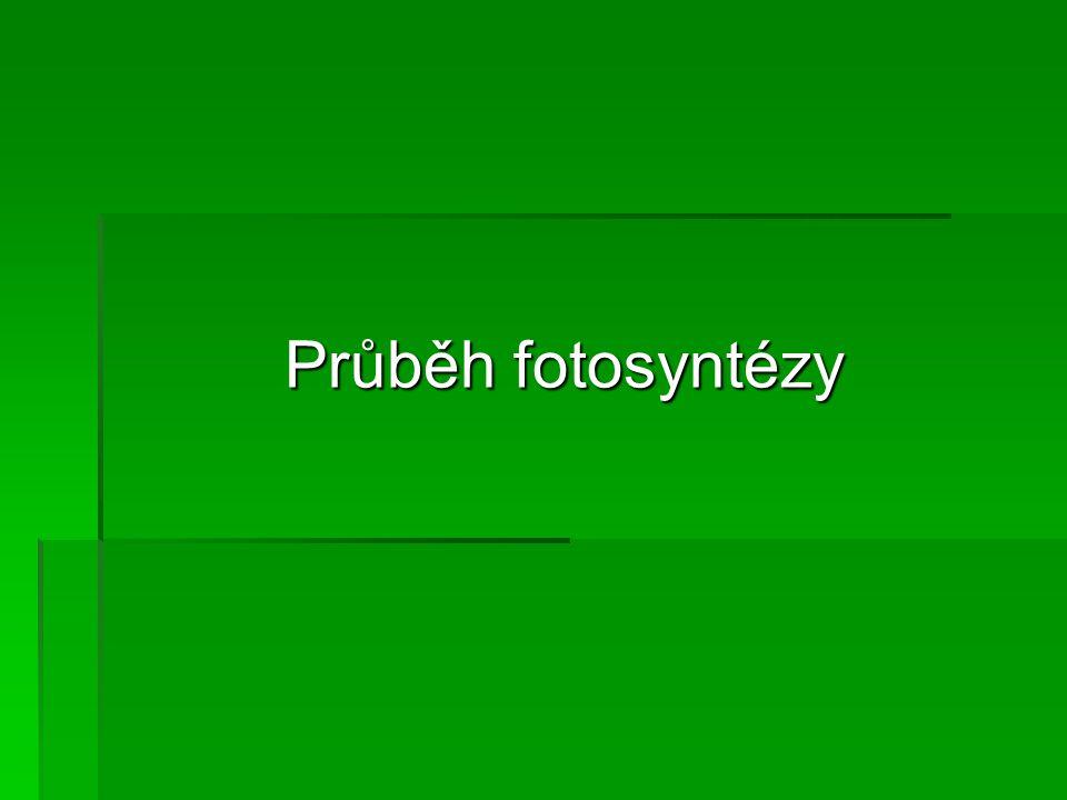 Průběh fotosyntézy
