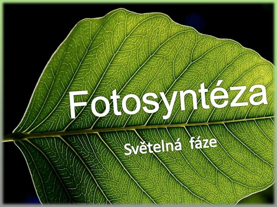 Fotosyntéza patří k jednomu z nejstarších a nejdůležitějších dějů v přírodě přeměna světelné E na chemickou, pomocí které se z anorganických látek tvoří organické spolu s glukoneogenezí patří mezi procesy, při kterých vznikají sacharidy pro správný průběh nutný fotosyntetický aparát