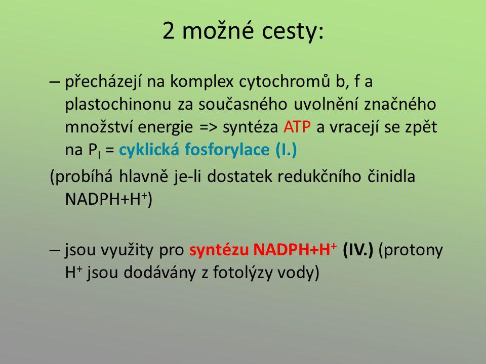 2 možné cesty: – přecházejí na komplex cytochromů b, f a plastochinonu za současného uvolnění značného množství energie => syntéza ATP a vracejí se zp