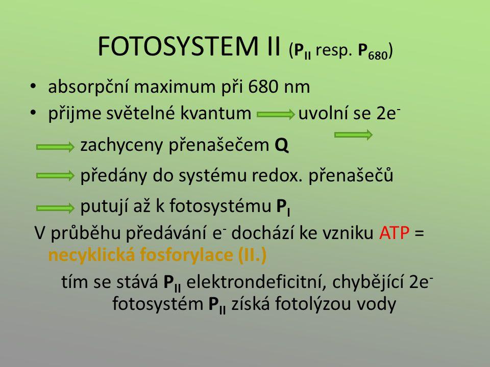 FOTOSYSTEM II (P II resp. P 680 ) absorpční maximum při 680 nm přijme světelné kvantum uvolní se 2e - zachyceny přenašečem Q předány do systému redox.