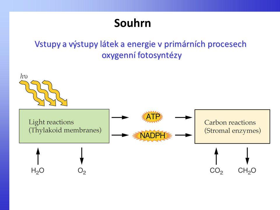 Vstupy a výstupy látek a energie v primárních procesech oxygenní fotosyntézy oxygenní fotosyntézy Souhrn