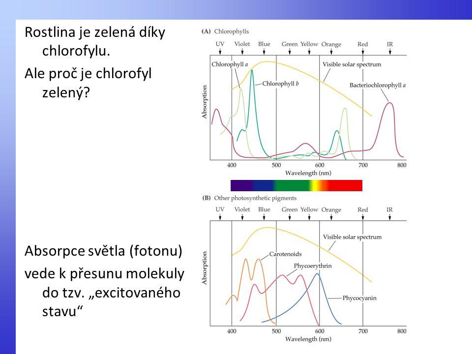 """Rostlina je zelená díky chlorofylu. Ale proč je chlorofyl zelený? Absorpce světla (fotonu) vede k přesunu molekuly do tzv. """"excitovaného stavu"""""""