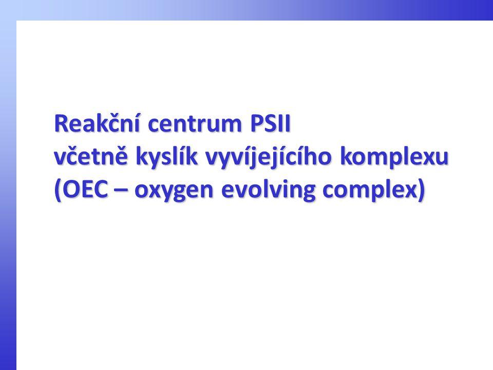 Reakční centrum PSII včetně kyslík vyvíjejícího komplexu (OEC – oxygen evolving complex)