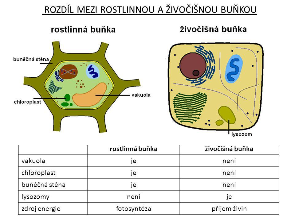 ROZDÍL MEZI ROSTLINNOU A ŽIVOČIŠNOU BUŇKOU rostlinná buňkaživočišná buňka vakuolajenení chloroplastjenení buněčná stěnajenení lysozomyneníje zdroj ene