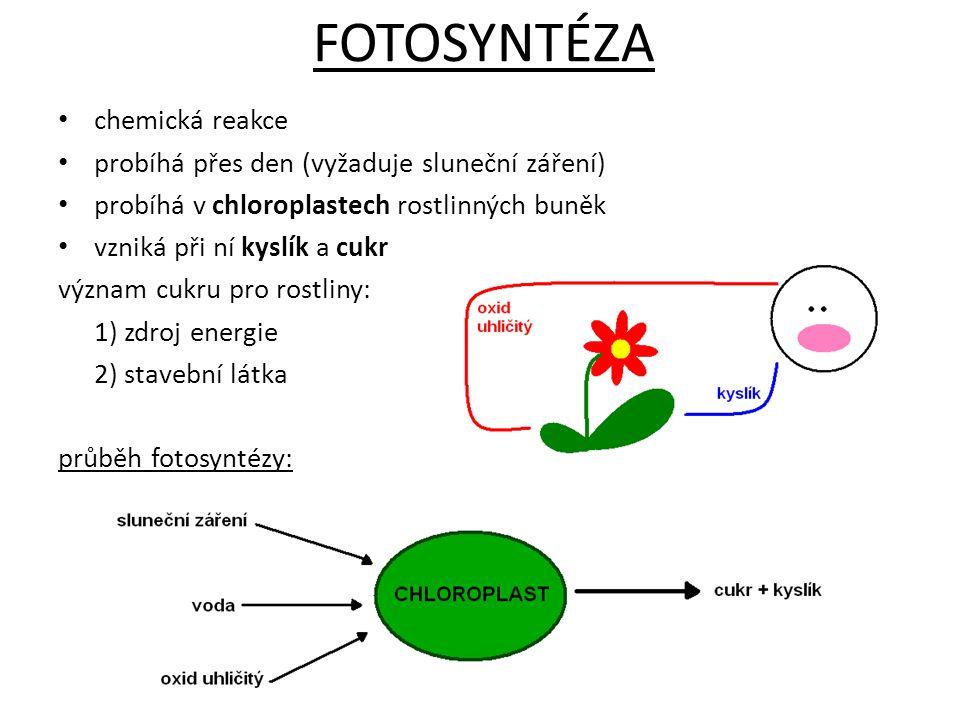 FOTOSYNTÉZA chemická reakce probíhá přes den (vyžaduje sluneční záření) probíhá v chloroplastech rostlinných buněk vzniká při ní kyslík a cukr význam