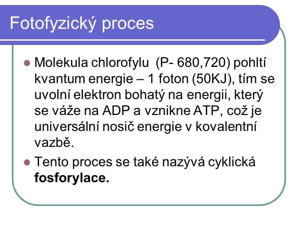 Fotofyzický proces Molekula chlorofylu (P- 680,720) pohltí kvantum energie – 1 foton (50KJ), tím se uvolní elektron bohatý na energii, který se váže n
