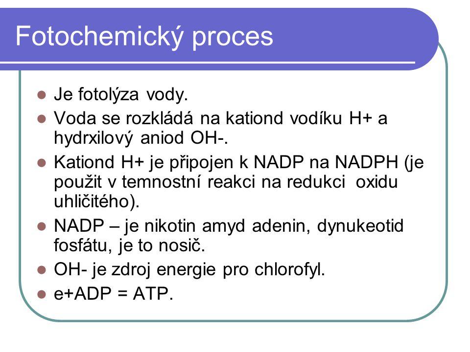 Fotochemický proces Je fotolýza vody. Voda se rozkládá na kationd vodíku H+ a hydrxilový aniod OH-. Kationd H+ je připojen k NADP na NADPH (je použit