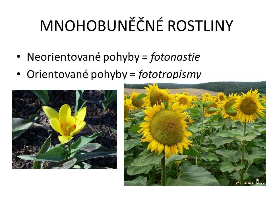 MNOHOBUNĚČNÉ ROSTLINY Neorientované pohyby = fotonastie Orientované pohyby = fototropismy