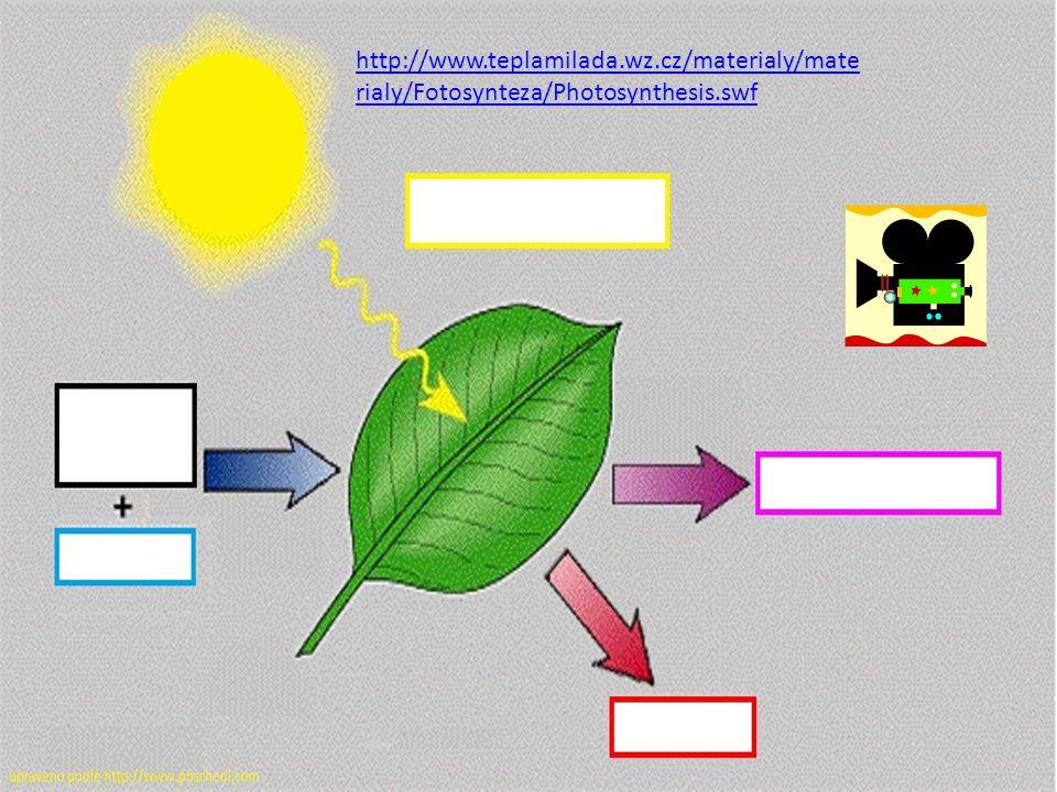 http://www.teplamilada.wz.cz/materialy/mate rialy/Fotosynteza/Photosynthesis.swf