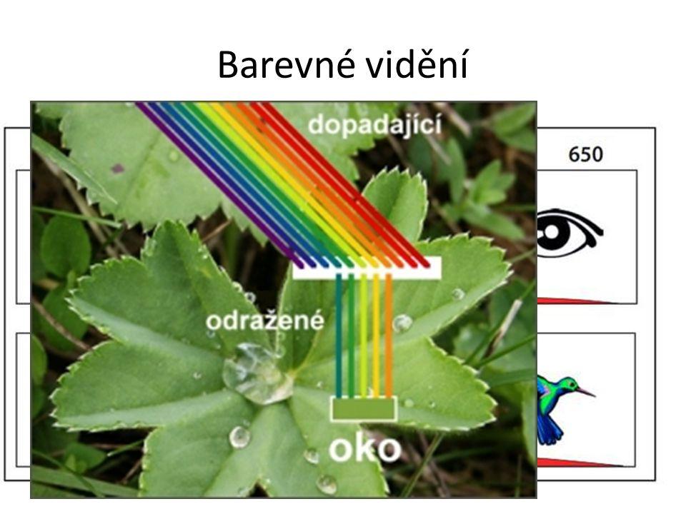 Barevné vidění