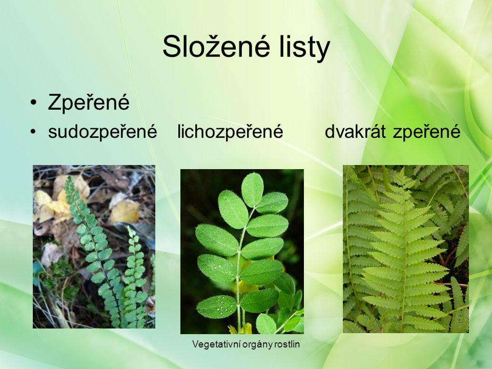 Složené listy Zpeřené sudozpeřenélichozpeřené dvakrát zpeřené Vegetativní orgány rostlin