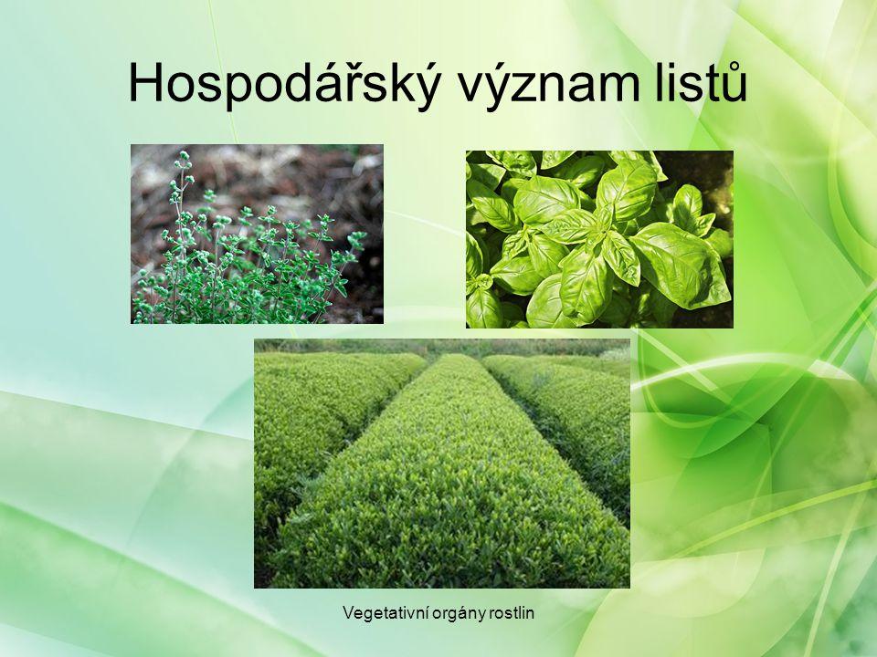 Hospodářský význam listů Vegetativní orgány rostlin