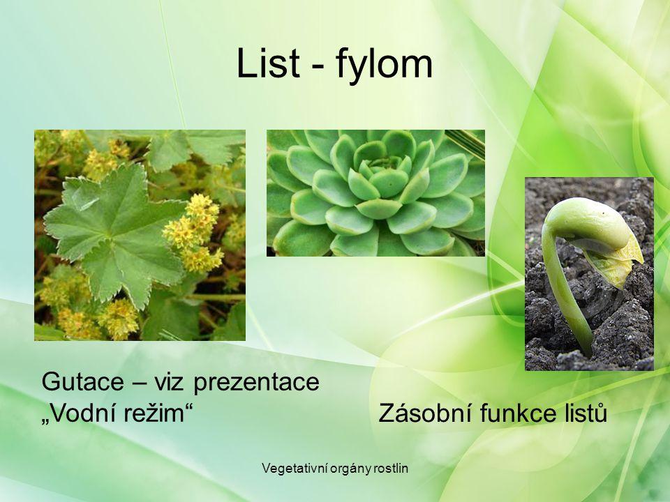 """List - fylom Vegetativní orgány rostlin Gutace – viz prezentace """"Vodní režim"""" Zásobní funkce listů"""