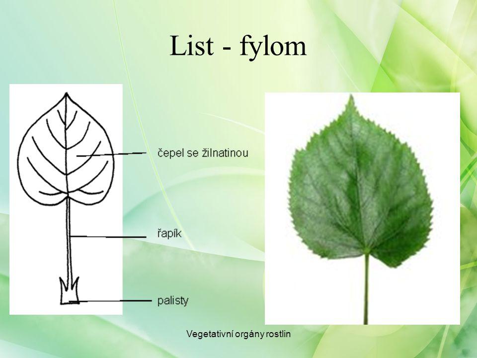 Listová žilnatina Žilnatina Vidličnatá Rovnoběžná Souběžná Zpeřená: Dlanitá Vegetativní orgány rostlin