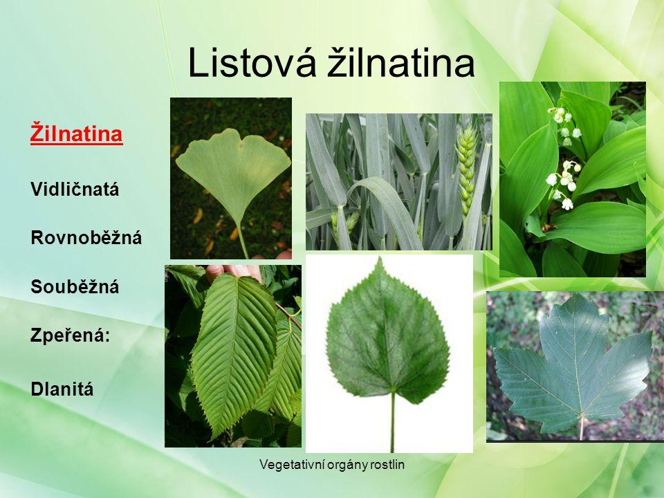 Listová žilnatina Žilnatina: Zpeřená: z hlavní žilky odbočují oboustranně žilky postranní, které se dále větví, např.