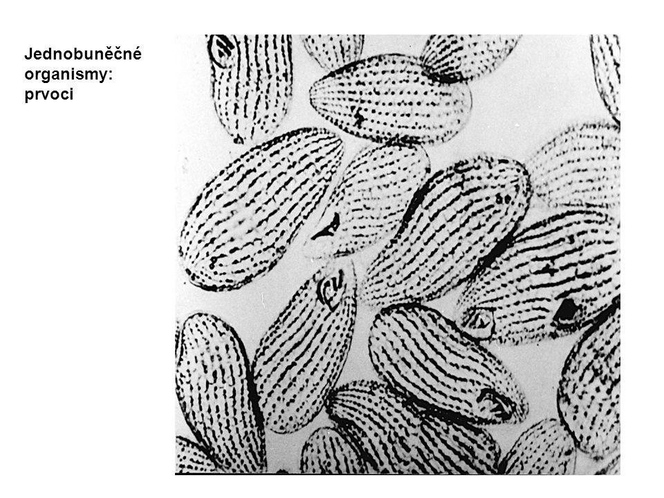 Jednobuněčné organismy: prvoci