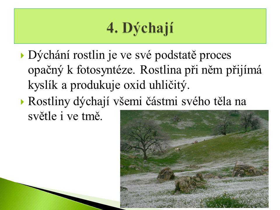  Dýchání rostlin je ve své podstatě proces opačný k fotosyntéze.