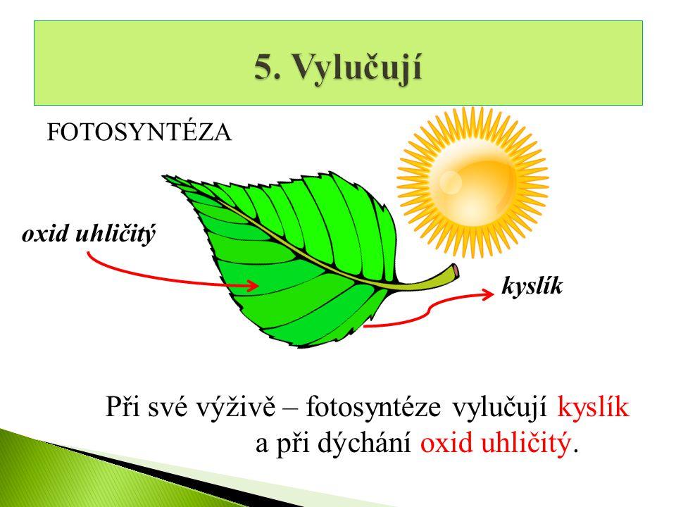 oxid uhličitý kyslík FOTOSYNTÉZA Při své výživě – fotosyntéze vylučují kyslík a při dýchání oxid uhličitý.