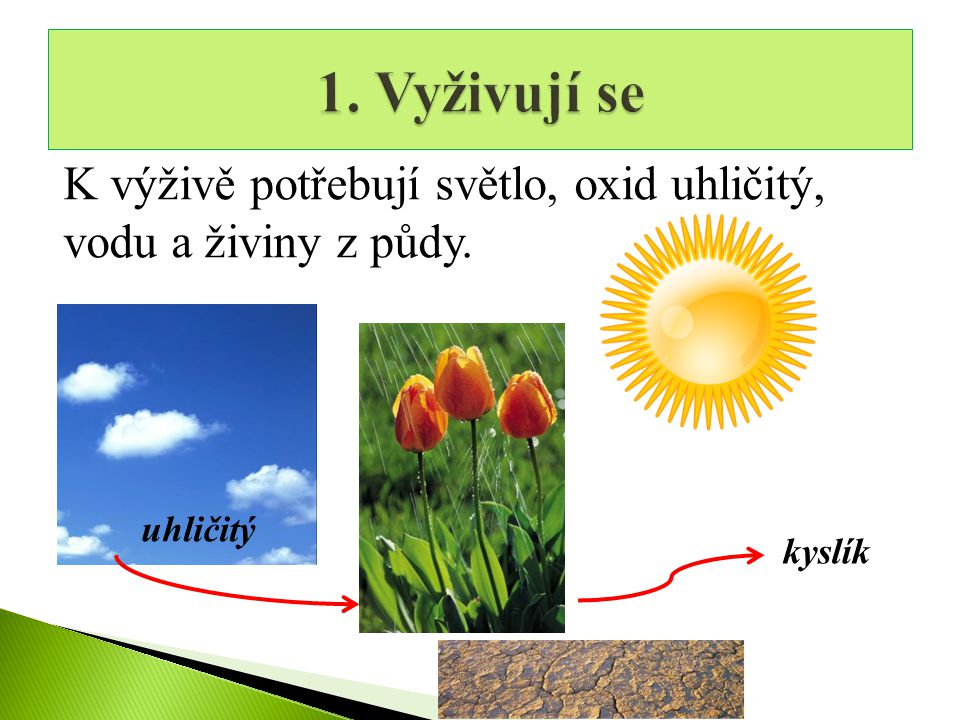 K výživě potřebují světlo, oxid uhličitý, vodu a živiny z půdy. kyslík uhličitý