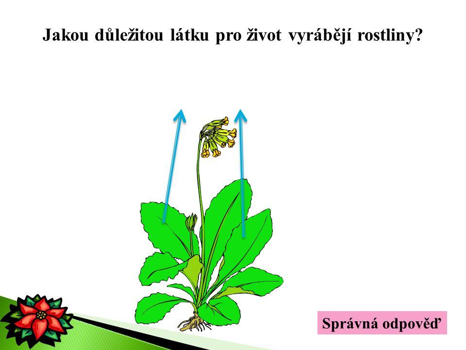 Jakou důležitou látku pro život vyrábějí rostliny? kyslík Správná odpověď