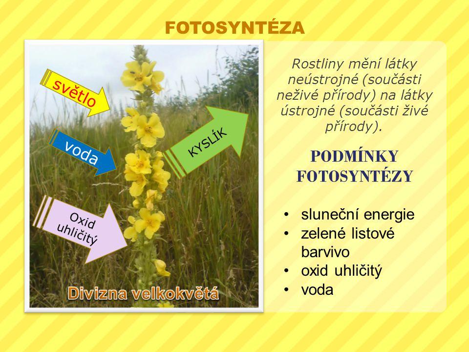 PODMÍNKY FOTOSYNTÉZY Rostliny mění látky neústrojné (součásti neživé přírody) na látky ústrojné (součásti živé přírody). sluneční energie zelené listo