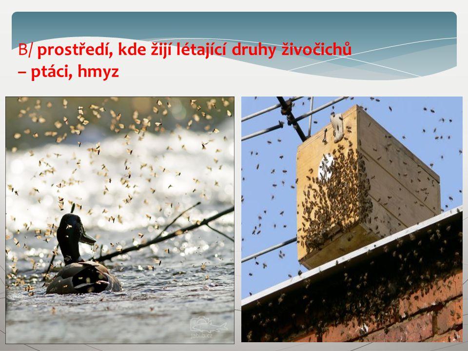 B/ prostředí, kde žijí létající druhy živočichů – ptáci, hmyz